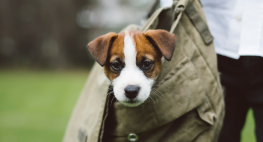 Are Pets Tax Deductible?