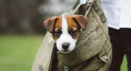 Is This Deductible? Adopting a Pet