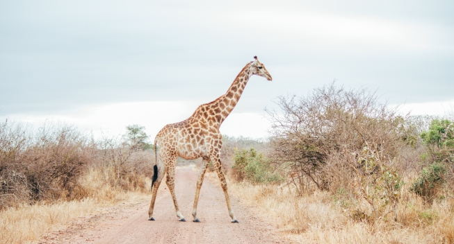 Travel to South Africa With Your Tax Refund!